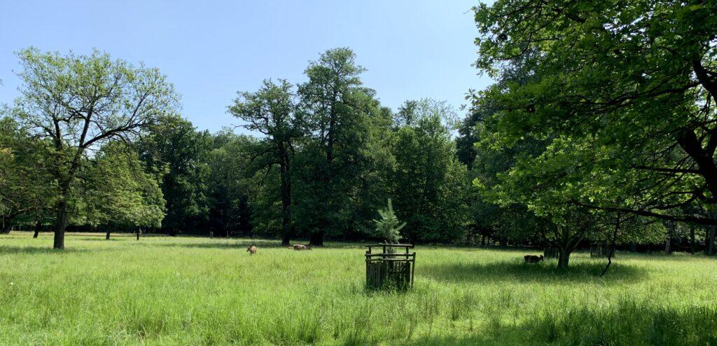 Zámecký park Častolovice